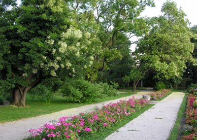 Stoljetna stabla japanske sofore (Sophora japonica) rastu uz istočni rub partera