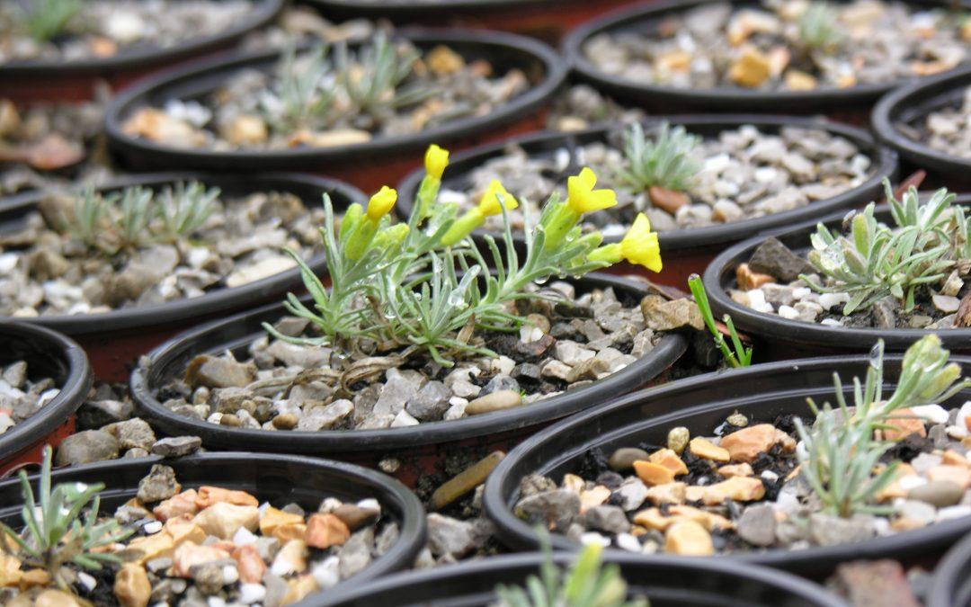 Dnevna prodaja viška biljaka